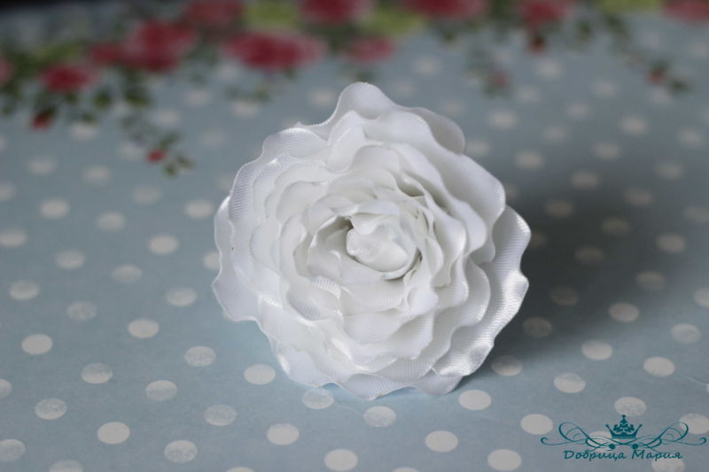 rozy iz lent16